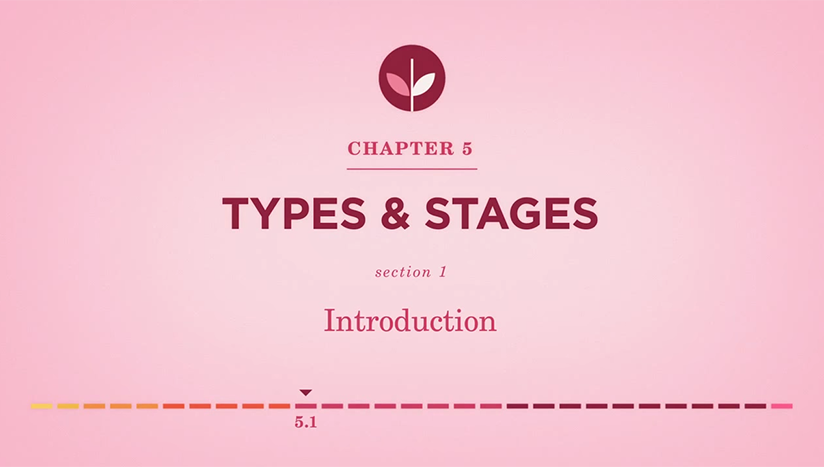 Chapter 5 - Types & Stages