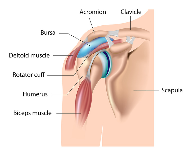 Rotator Cuff Graphic and Shoulder Injury Diagnosis